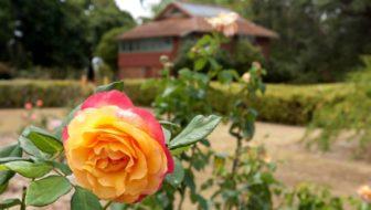 Australia Day At Yaralla Estate – Jackie M Pop-Up